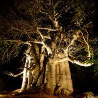 Unguja Lodge Baobab Zanzibar