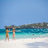 unguja lodge dhow beach trip